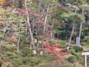 Japánkert képek az internetről - 1024x768 pixel - 429629 byte
