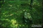 Japánkert képek az internetről - 712x467 pixel - 161749 byte