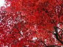 Japánkert képek az internetről - 1024x768 pixel - 471183 byte
