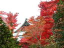 Japánkert képek az internetről - 1024x768 pixel - 403918 byte