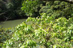 Japánkert képek az internetről - 1024x683 pixel - 513828 byte