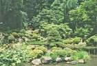 Japánkert képek az internetről - 640x437 pixel - 120345 byte