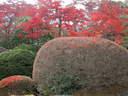 Japánkert képek az internetről - 1024x768 pixel - 455076 byte
