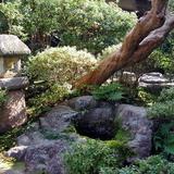 Japánkert képek az internetről - 640x480 pixel - 145551 byte