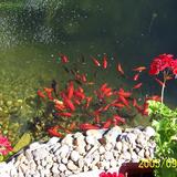 Kertitó fürdőtó vízesés csobogó kerti patak - 1024x683 pixel - 356607 byte