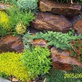Kerti szikla, sziklakert - 1024x683 pixel - 523112 byte