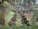 Japánkert képek az internetről - 1024x768 pixel - 349842 byte