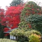 Japánkert képek az internetről - 800x600 pixel - 229242 byte
