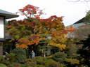 Japánkert képek az internetről - 1024x768 pixel - 358110 byte