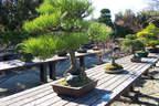 Japánkert képek az internetről - 1024x683 pixel - 538914 byte
